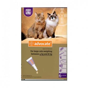ADVOCATE CAT >4KG PIP.